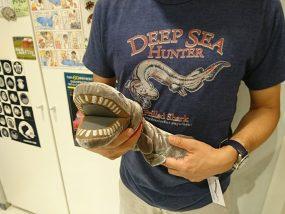 シン・ラブカが話題!第2形態モデル!ラブカ鮫について調査!